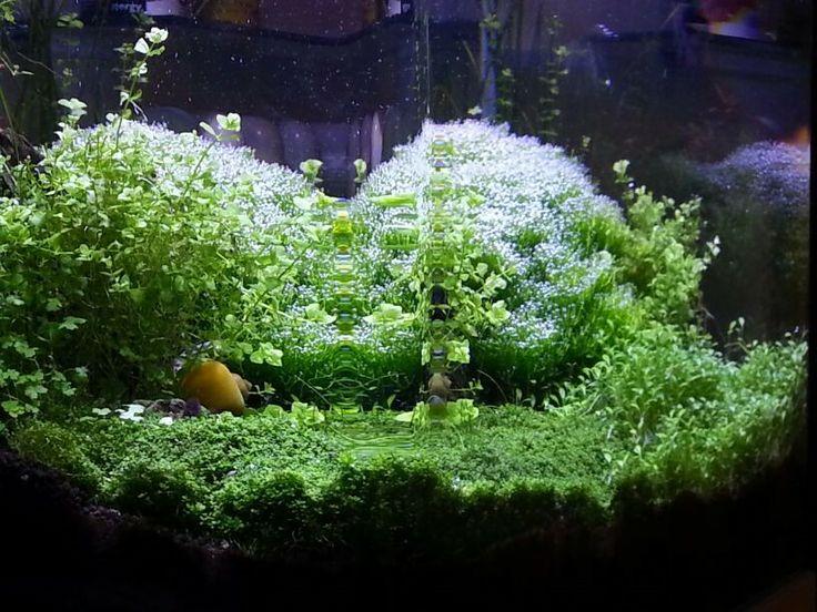 Planted Aquarium Ideas