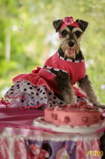 Ella es Candy, una bella perrita que nos permitió hacer una sesión fotográfica en su fiesta de cumpleaños. Visita nuestra pagina web www.fotozoo.net