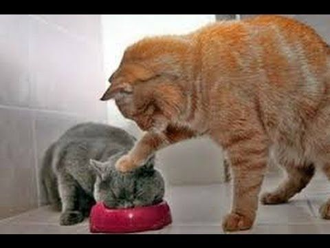 Animals Can Be Jerks - Best Funny Compilation! - YouTube