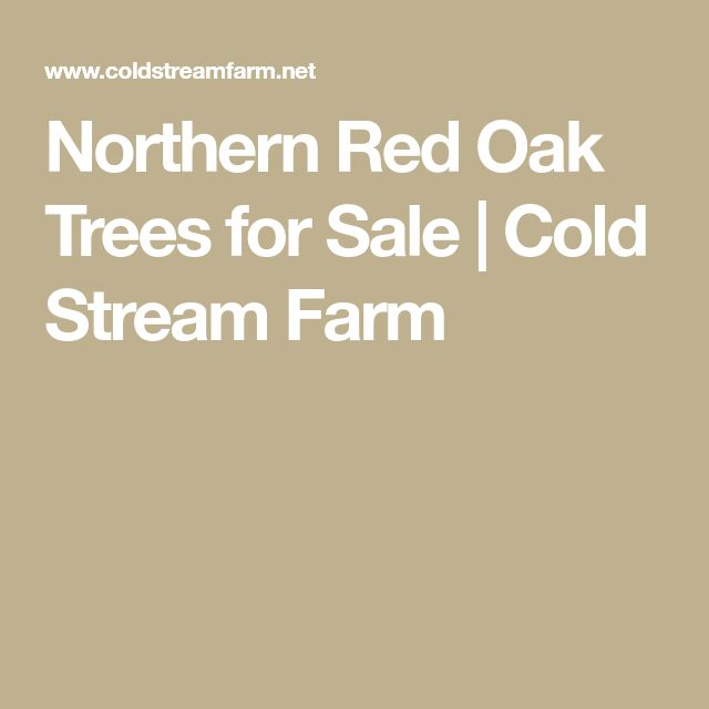 Northern Red Oak Trees for Sale | Cold Stream Farm