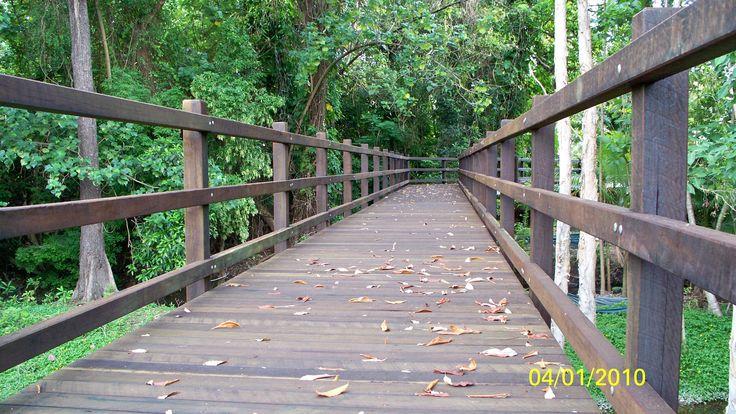 Timber Boardwalk - Cairns
