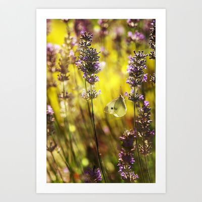 Butterfly on Lavender Art Print by Digital Dreams - $14.99
