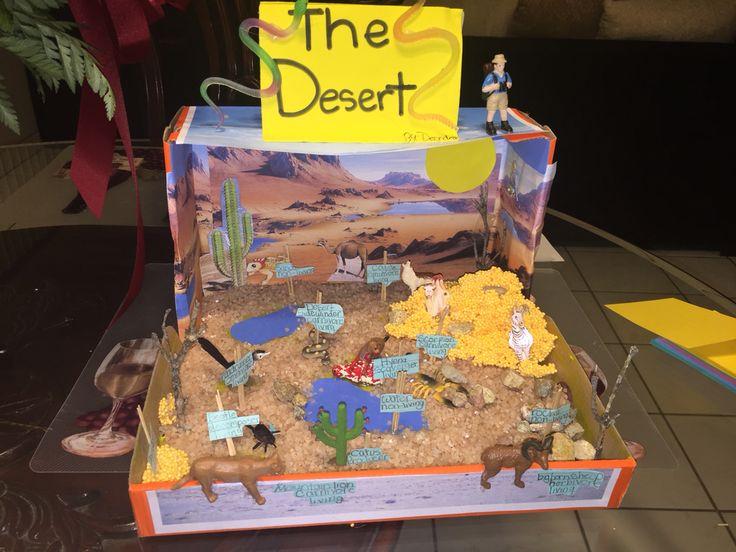 Desert ecosystem diorama 4th grade