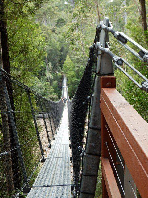 tahune forest air walk & forest walk