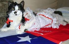 Image result for gato chileno
