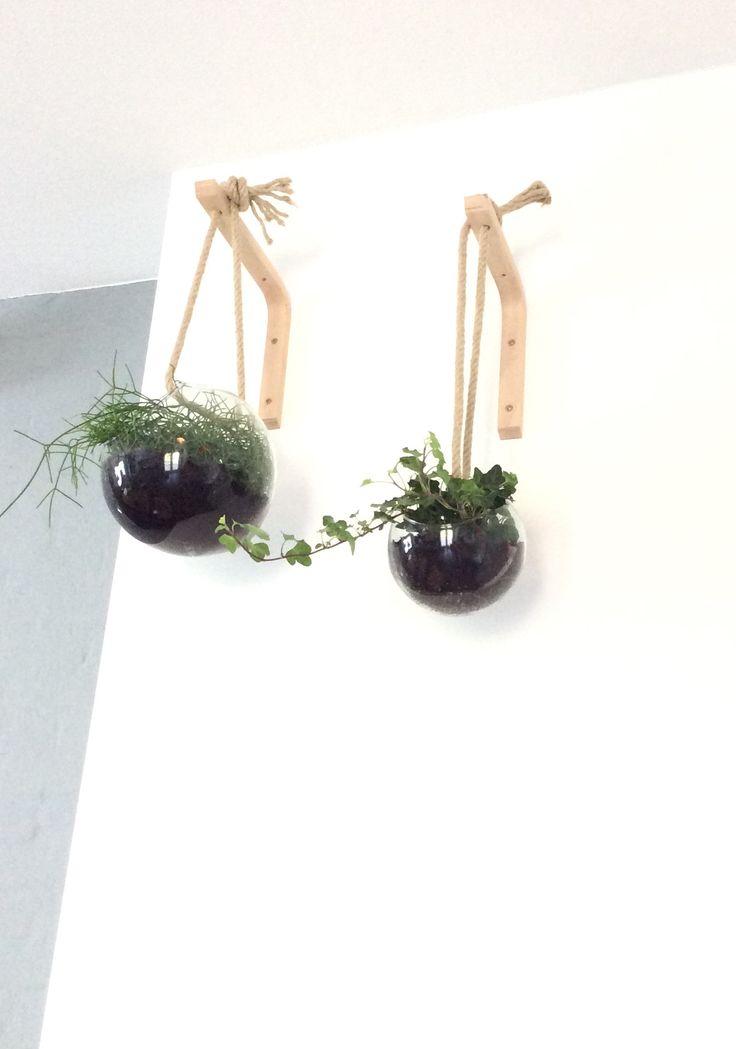 Hangplanten in glazen bol