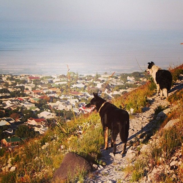 Enjoying the view on the mountain #hermanus http://instagram.com/groundhogget 21 March 2014