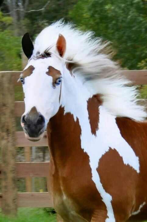 Unique horse! Pay attention to the eyebrows, dark muzzle and two different colored ears! Simply beautiful