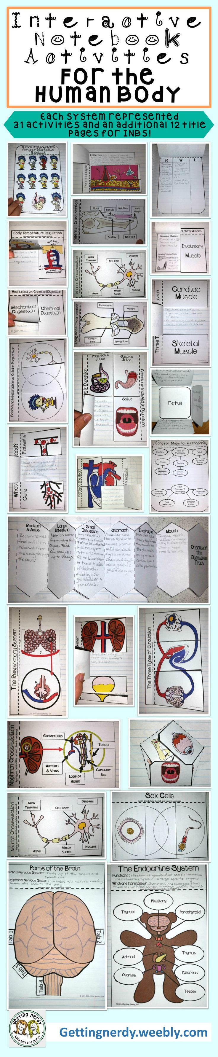 30+ Interactive Notebook Life Science Activities for the Human Body- each body system is represented