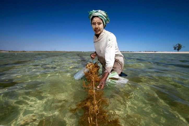 A woman who decides to space her children using family planning has more time to earn money from growing seaweed, which she uses to send her children to school, increasing their opportunities to pursue livelihoods beyond fishing such as midwifery or teaching -- thus reducing pressure on marine ecosystems.
