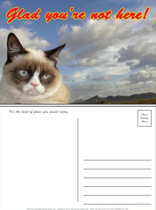 LOL I need this post card. I love Grumpy Cat.