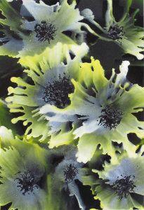 Bloom 2  Encaustic Wax Art Gallery : Phil Madley