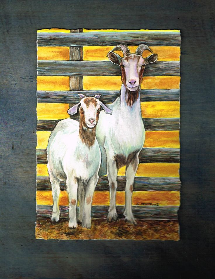 Couple of Goats