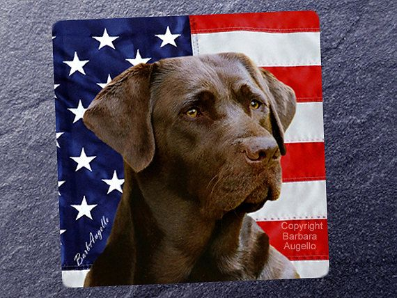 Chocolate Lab Patriotic Coasters by Barbara Augello for Dogimage