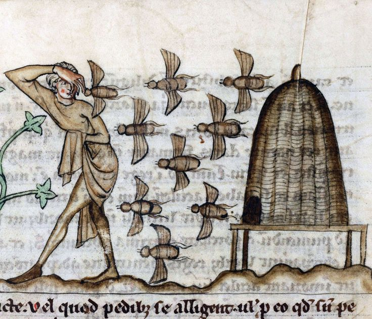 beesDe Natura animalium, Cambrai ca. 1270Douai, Bibliothèque municipale, ms. 711, fol. 37r