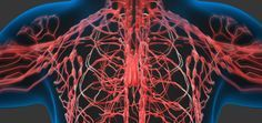 The Secret To Staying Healthy Is Your Lymphatic System