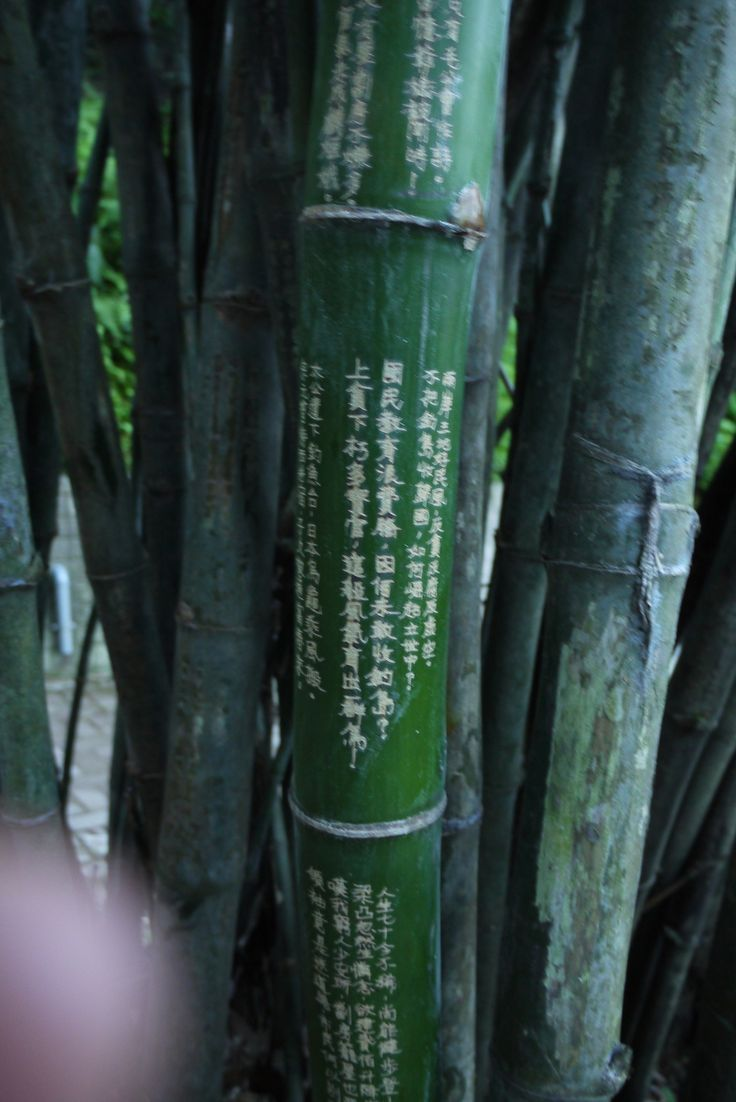 went for a run and saw bamboos, with chinese poems engraved on them.
