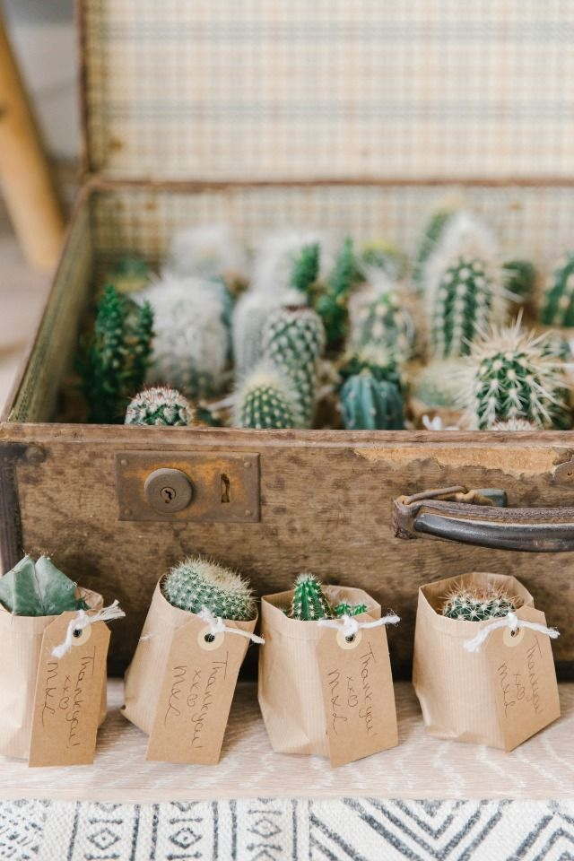mini cactus wedding favors