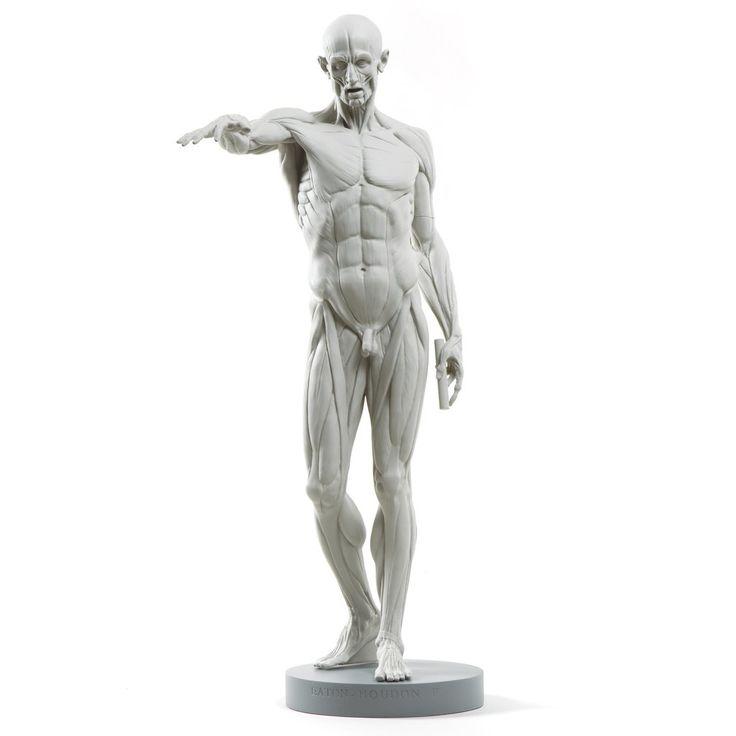 13 besten ecorcheFIGURE Bilder auf Pinterest   Anatomieverweis ...
