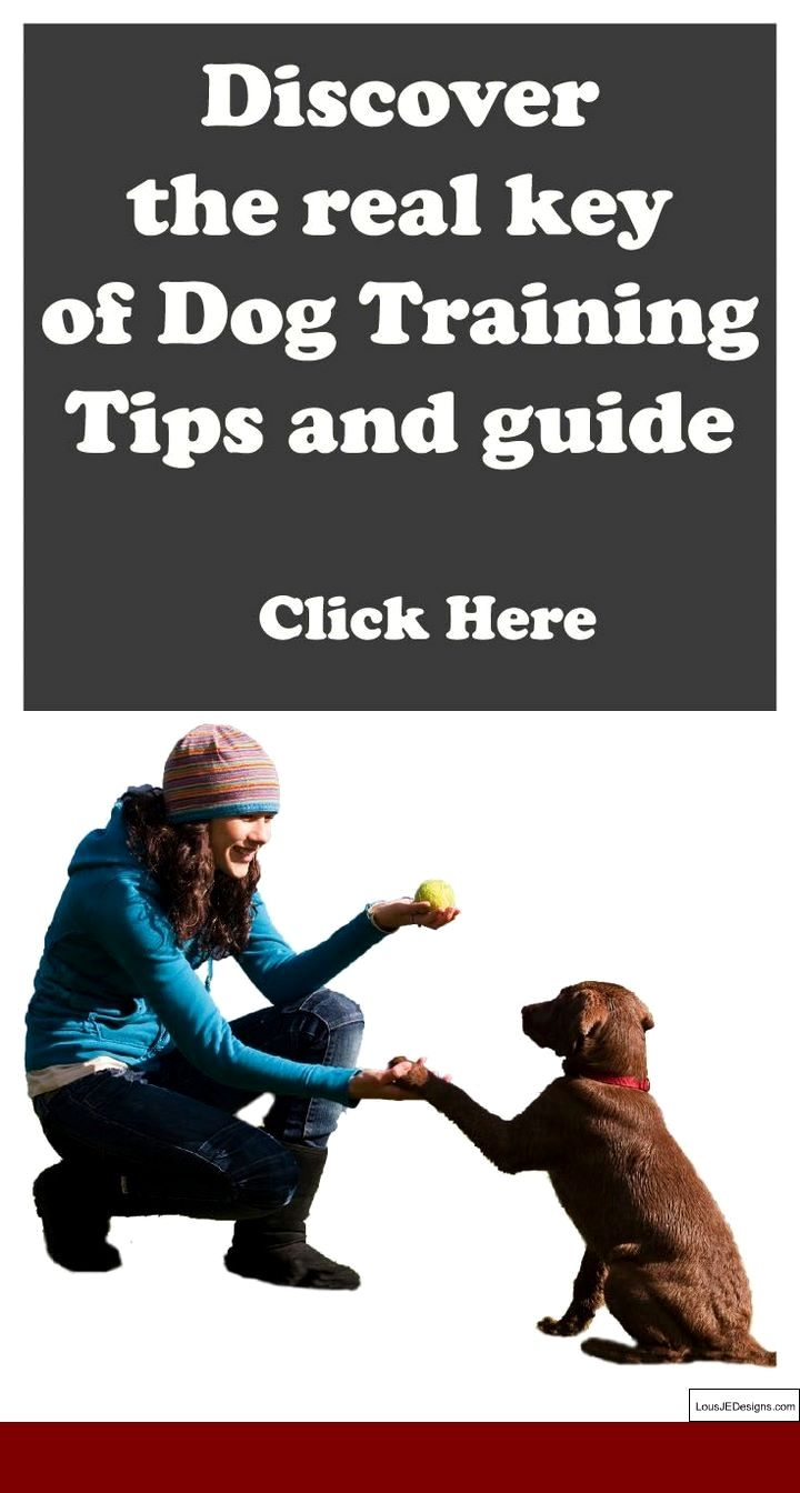 How To Train A Bird Dog To Stay Close And Pics Of Dog Training