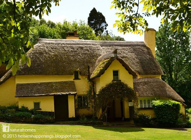 In the past people would 'patch up' thatch over the years, but the affluent new owners of thatched houses can afford to completely overhaul the roof. Sadly this practice, without thought to the environment, is killing off the now rare thatch moss. The beautiful National Trust tearoom, called Periwinkle, in Selworthy, England has more than 3,000 plants on its thatched roof, which represents the largest known population of thatch moss anywhere in the world. Find out more at…