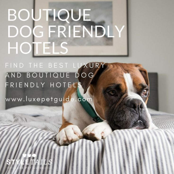 looking for a more relaxed dog friendly holiday a dog friendly bed and breakfast is