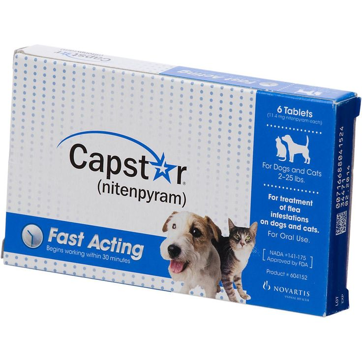 Capstar Flea Tablets for Dogs and Cats, 2-25 lbs. -- Learn more by visiting the image link. (This is an affiliate link and I receive a commission for the sales)