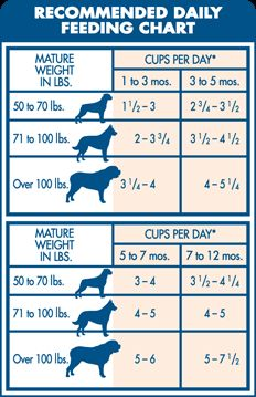 Bernese Mountain Dog Food Portions