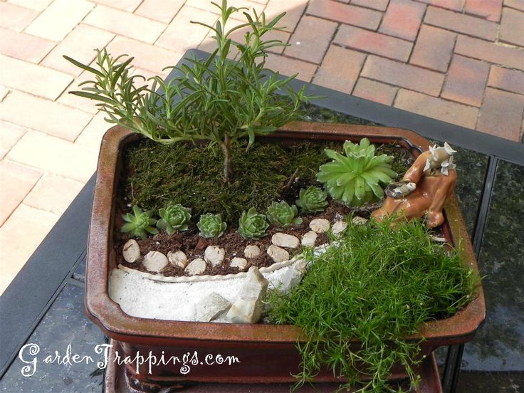 Rosemary bonsai diy miniature zen garden and rosemary for Mini garden landscape