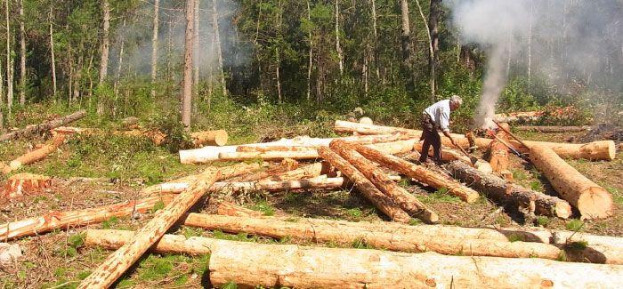 La mayor deforestación registrada a nivel mundial se concentra en regiones tropicales. Particularmente Latinoamérica, que registra una de las tasas anuales de deforestación más altas del mundo