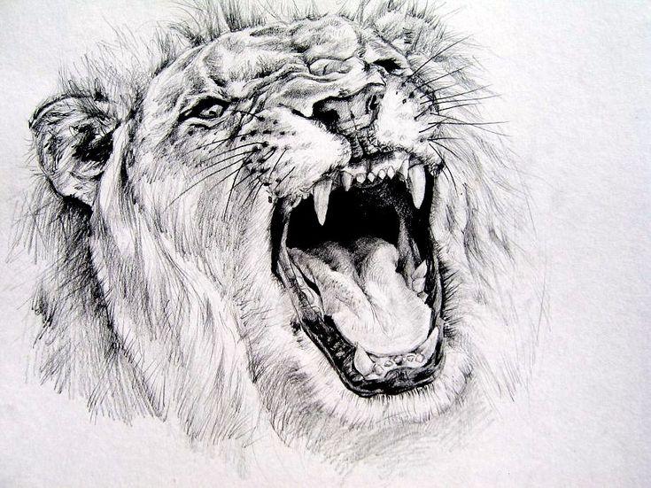 lion roar sketch easy wwwpixsharkcom images