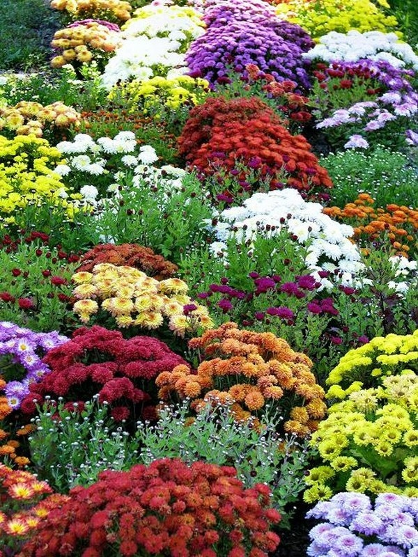 147 best images about Autumn Garden Ideas on PinterestTrees and