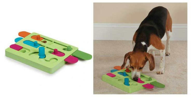 Best Toy For Hiding Dog Treats
