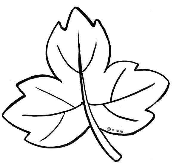 dibujos de hojas de flores de otono para colorear   Estaño   Pinterest