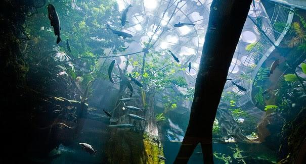 24 Best Images About World Public Aquariums On Pinterest
