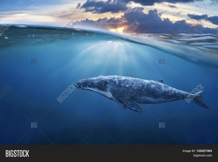 Whale in Half Air Half Sky Wall Mural, Wall Decals
