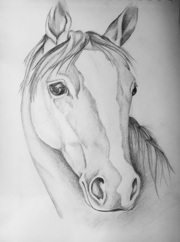 Thoroughbred - Charcoal Pencil