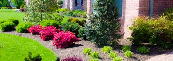 8 insider secrets to beautiful front yard landscaping