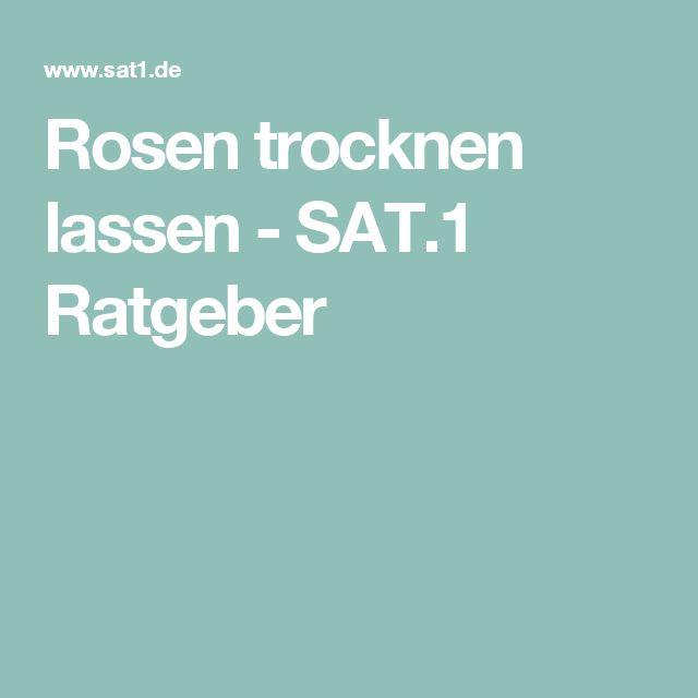 Rosen trocknen lassen - SAT.1 Ratgeber