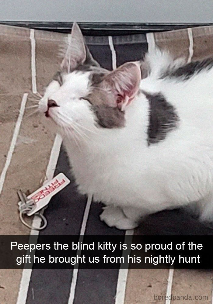 Cat People Will Definitely Relate To These Memes I Can Has Cheezburger Cats Are Jerks Funny Cats Compilation 202 In 2020 Funny Cat Memes Cat Parenting Crazy Cats