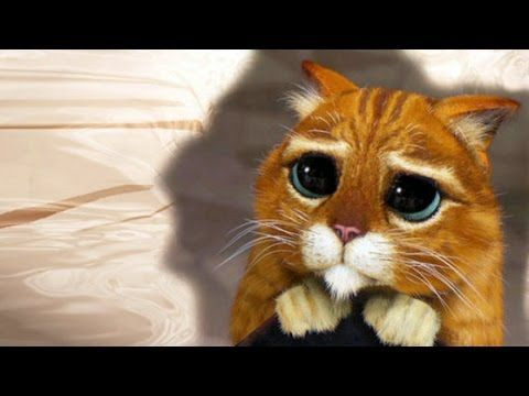 The Best Funny Videos With Cats