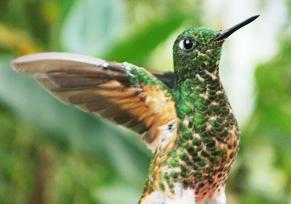 Reisebericht Ecuador: Atemberaubende Schönheit in Südamerika