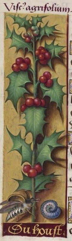 Holly border from the Grandes Heures d'Anne de Bretagne, illuminated by Jean Bourdichon, ca.1503-08. Illumination on parchment. More than 300 pages have large borders with a detailed illustration of (usually) a single species of plant
