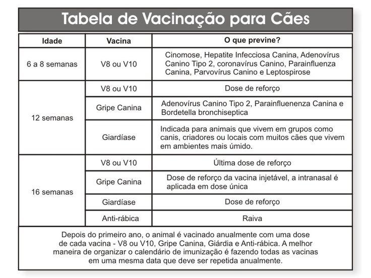 Vacinas e Calendário de Vacinação para Cães - Tudo sobre Cachorros