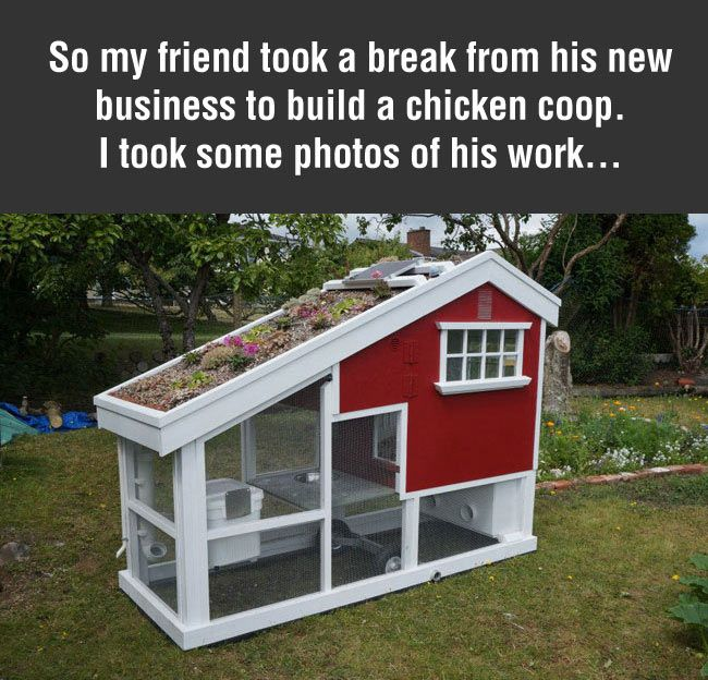 Guy takes a break from his job builds something awesome for Cool chicken coop plans