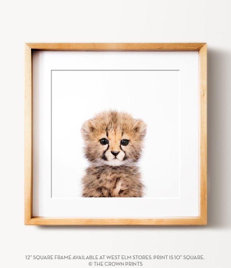 Best 25+ Cheetah print walls ideas on Pinterest   Cheetah ...