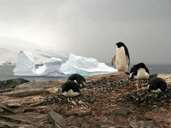 7 best nationalgeogragh images on Pinterest | Beautiful birds ...
