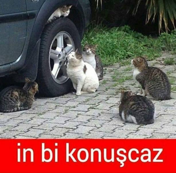 Gününüzü Neşelendirecek Komik Kedi Capsleri
