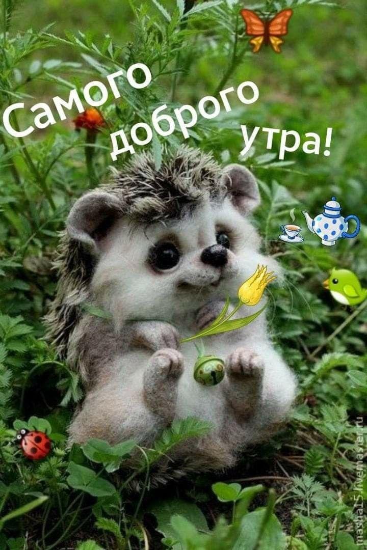 Доброе утро картинки красивые смешные с животными