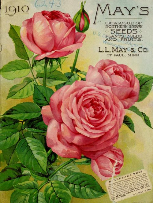 Front cover of 'May's Catalogue of Northern Grown Seeds, Plants, Bulbs and Fruits' 1910 with an illustration of Minnehaha Rose.L.L. May & Co. St Paul, Minn. U.S. Department of Agriculture, National Agricultural Library Biodiversity Heritage Library.  archive.org